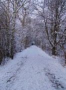 Maudacher Bruch Weg im Winter.jpg
