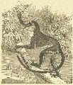 Meerkat (1).jpg