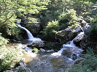 Meibaku, Rurikei02.JPG
