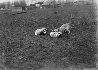 Men holding fox cub