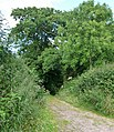 Mid Devon , Country Lane - geograph.org.uk - 1214835.jpg