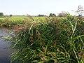 Mijdrecht, Netherlands - panoramio - Han Jongeneel (2).jpg