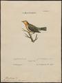 Mniotilta pinus - 1700-1880 - Print - Iconographia Zoologica - Special Collections University of Amsterdam - UBA01 IZ16300015.tif