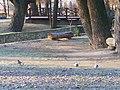 Mohyliv-Podilskyi city park 15.jpg
