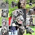 Molly RIP --( (10041386833).jpg