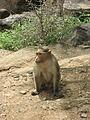 Monkey - 3.JPG