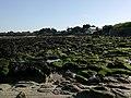 Morbihan Quiberon Saint-Julien Plage Grande Maree Basse Oies Bernache 05032014 - panoramio.jpg