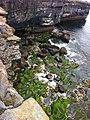 Mossy Rocks below Black Fort (6031110502).jpg