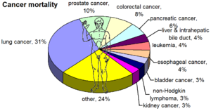 Most common cancers in the United States 2008....