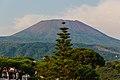 Mount Vesuvius Araucaria.jpg