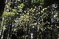 Mt. Walker Trail 05.jpg