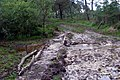 Muddy ford north-west of Dur Hill Inclosure, New Forest - geograph.org.uk - 501212.jpg