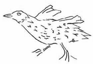 Ascension crake - Drawing by Peter Mundy, 1656