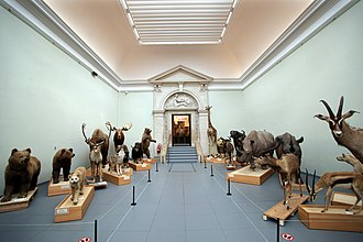 Musée Cantonal de Zoologie - Inside the Cantonal Museum of Zoology.