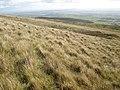 Mynydd Crwn - geograph.org.uk - 1001008.jpg