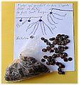 Nététou fermented African locust bean.jpg