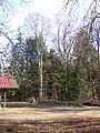 ND 4 Rotbuchen bei der Kohlhauhütte.jpg