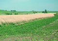 NRCSIA00050 - Iowa (2299)(NRCS Photo Gallery).jpg