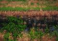 NRCSSD01003 - South Dakota (6025)(NRCS Photo Gallery).tif