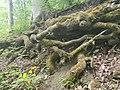 Nationalpark Hainich craulaer Kreuz 2020-06-03 6.jpg