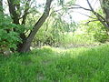 Naturschutzgebiet Heuckenlock 21.05.2014 Phase 119.JPG
