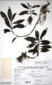 Neuchatel Herbarium Types NEU000113001.tif