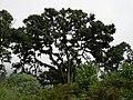 Ngorongoro Crater, Tanzania (2391469335).jpg
