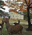 Noboriojicho, Nara, Nara Prefecture 630-8213, Japan - panoramio (5).jpg