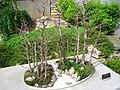 North Carolina Arboretum - bonsai 3.JPG