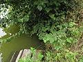 Nový rybník (přírodní rezervace) (009).jpg