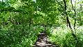 Oak Avenue Local Nature Reserve 8.JPG