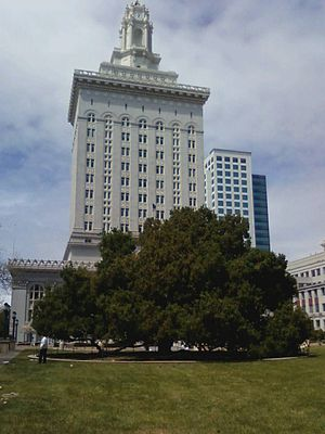 Oakland City Council - Oakland City Hall and Oak tree at Frank Ogawa Plaza