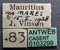 Ochetellus vinsoni casent0103299 label 1.jpg