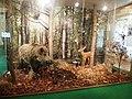Olomouc, Vlastivědné muzeum v Olomouci, zvířata v lese.jpg