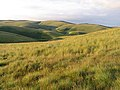 On the northwest slopes of Saughtree Fell - geograph.org.uk - 521200.jpg