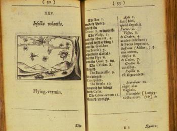 Un testo del 1658 raffigurante degli insetti. Prima del 1668 si pensava gli insetti prendessero vita per