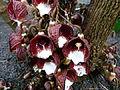Orchidées bb1.jpg