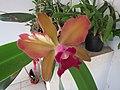 Orquidea - panoramio.jpg