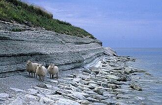 Osmussaar - Limestone cliff on the east coast of Osmussaar