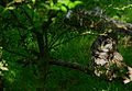 Owl-perched-branch-grass - West Virginia - ForestWander.jpg