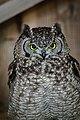 Owls @ Dragonheart, Enschede (9546766097).jpg