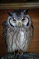 Owls @ Dragonheart, Enschede (9549399662).jpg