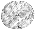 PSM V54 D532 Markers indicate location of meteorites found at coon butte.png
