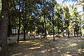 Parco Sodo 2 Tuoro sul Trasimeno.jpg