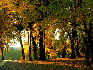 Herăstrău Park - Image: Parcul Herăstrău