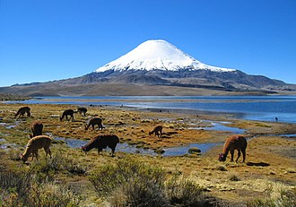 Parinacota (volcano) - Parinacota and Chungará Lake