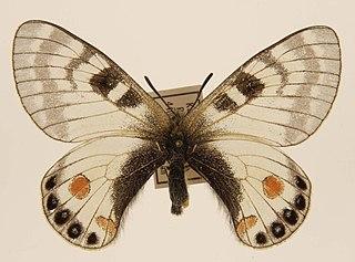 Lionel de Nicéville British entomologist