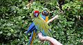 Parrots - Sylvan Animal Park.jpg