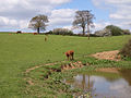 Pastures near Hedgerley - geograph.org.uk - 162827.jpg