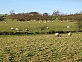 Pastures west of Catton (9) - geograph.org.uk - 679215.jpg